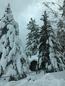 Bear Mountain